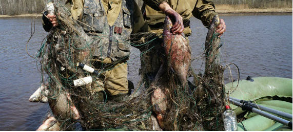 весенний запрет на рыбалку 2017 в чувашии
