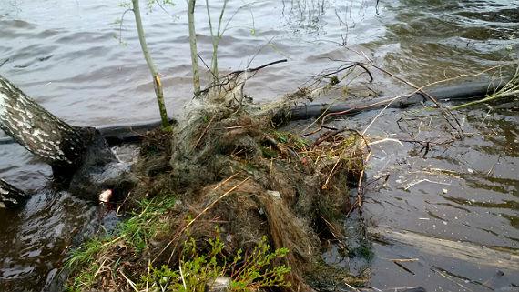 Экологические ужасы (2)