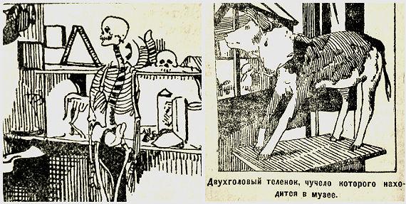 естественнонаучный музей в Рыбинске